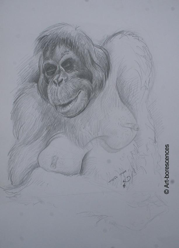 art-borescences-1311 (7)moly-orang-outan